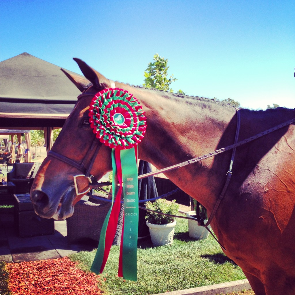 Metro with the gargantuan ribbon he earned in the Gucci-sponsored hunter derby.