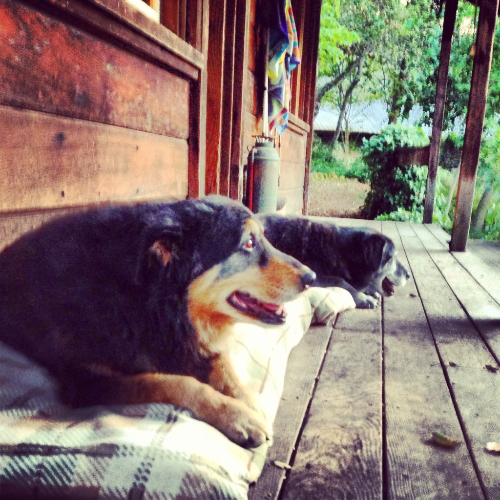 Sweet old dogs on the porch.