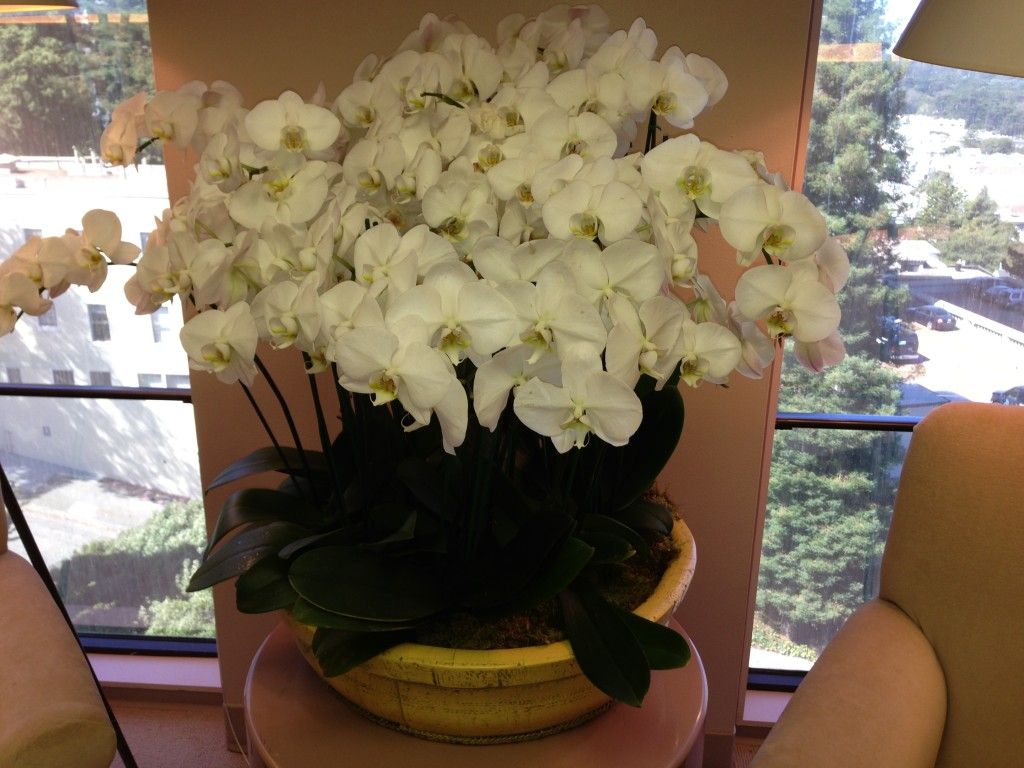 Moth orchid, orchid
