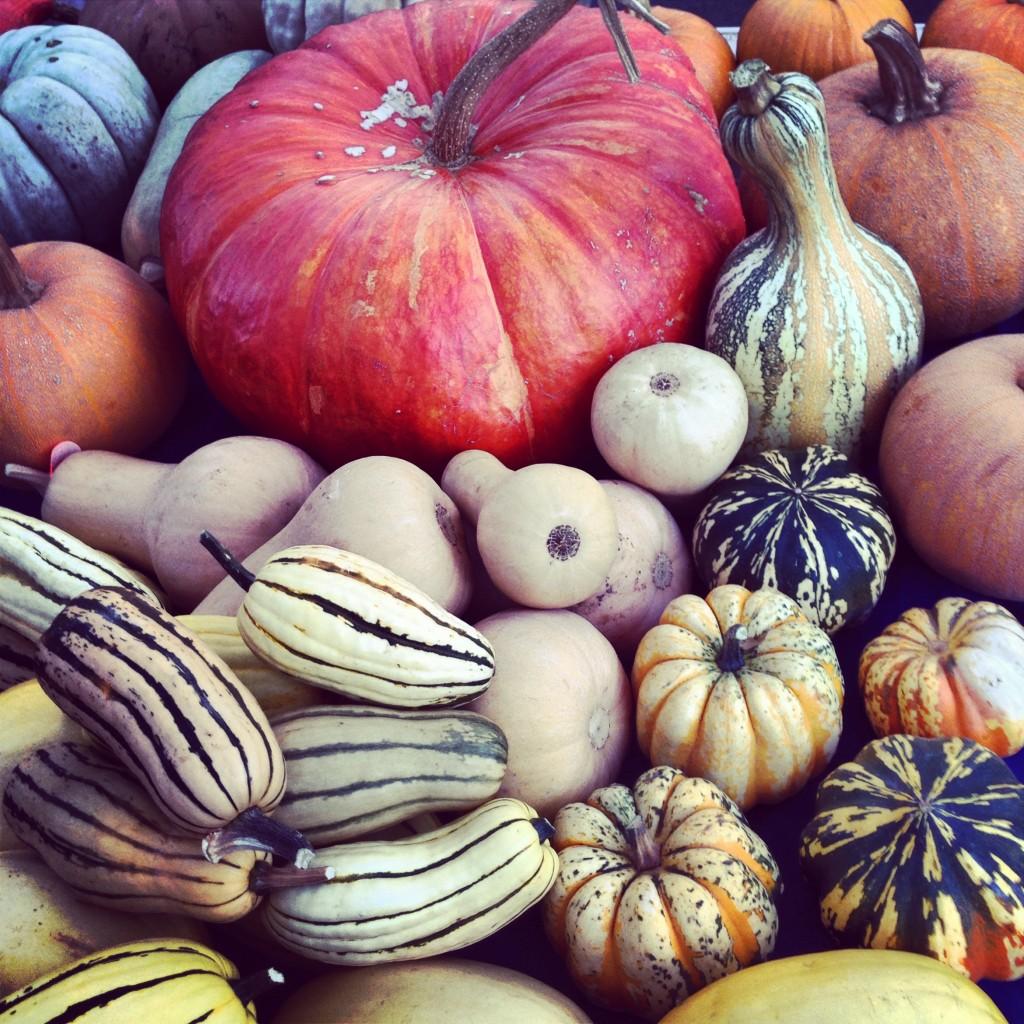 Pumpkins, Sonoma Farmers Market, Sonoma